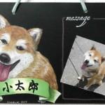 愛犬 柴①